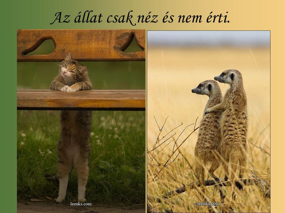 Az állat csak néz és nem érti.