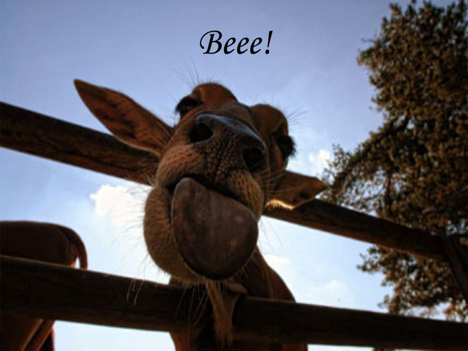 Beee!