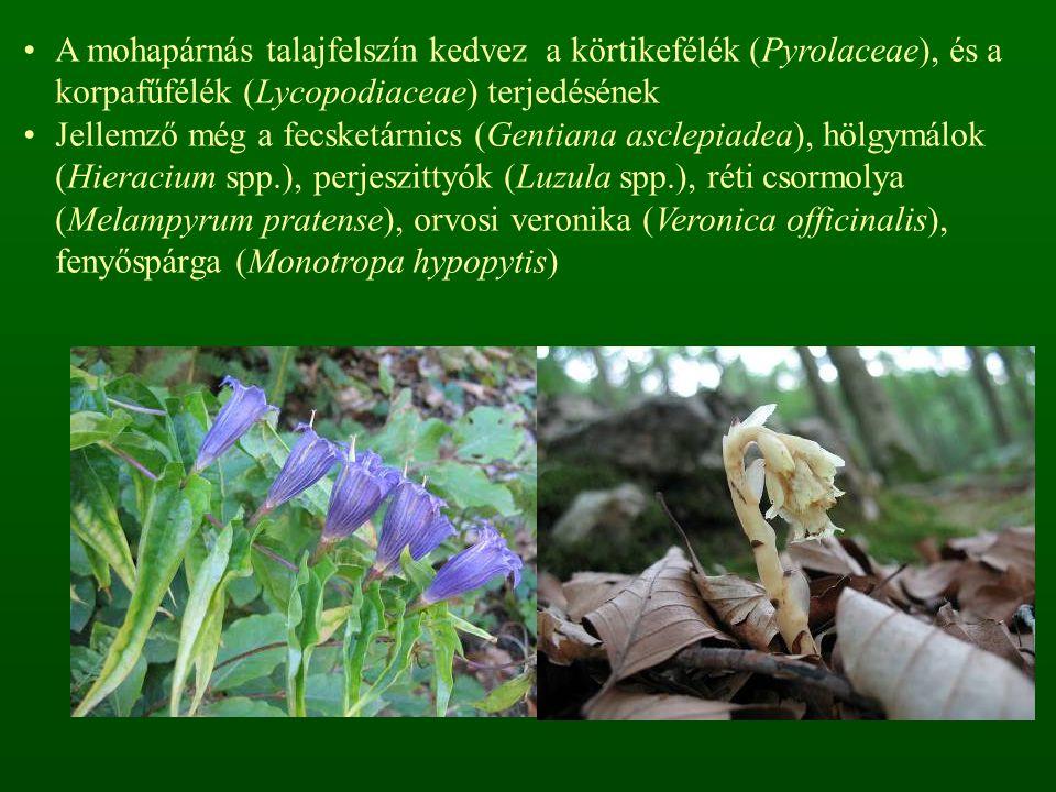 A mohapárnás talajfelszín kedvez a körtikefélék (Pyrolaceae), és a korpafűfélék (Lycopodiaceae) terjedésének