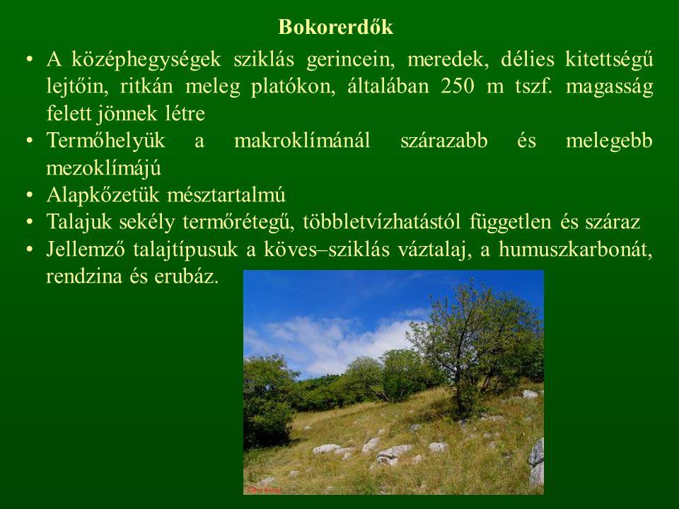 Bokorerdők