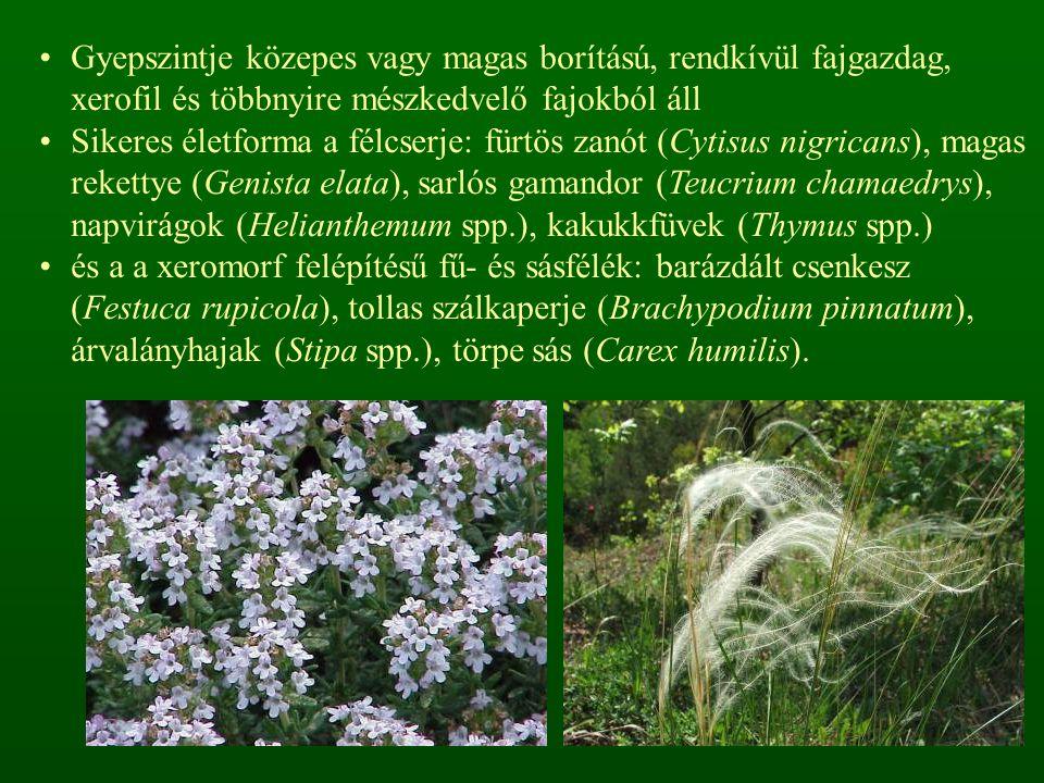 Gyepszintje közepes vagy magas borítású, rendkívül fajgazdag, xerofil és többnyire mészkedvelő fajokból áll