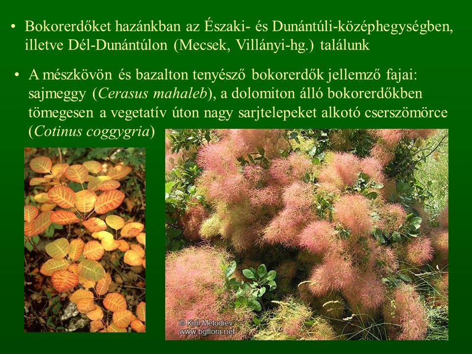 Bokorerdőket hazánkban az Északi- és Dunántúli-középhegységben, illetve Dél-Dunántúlon (Mecsek, Villányi-hg.) találunk