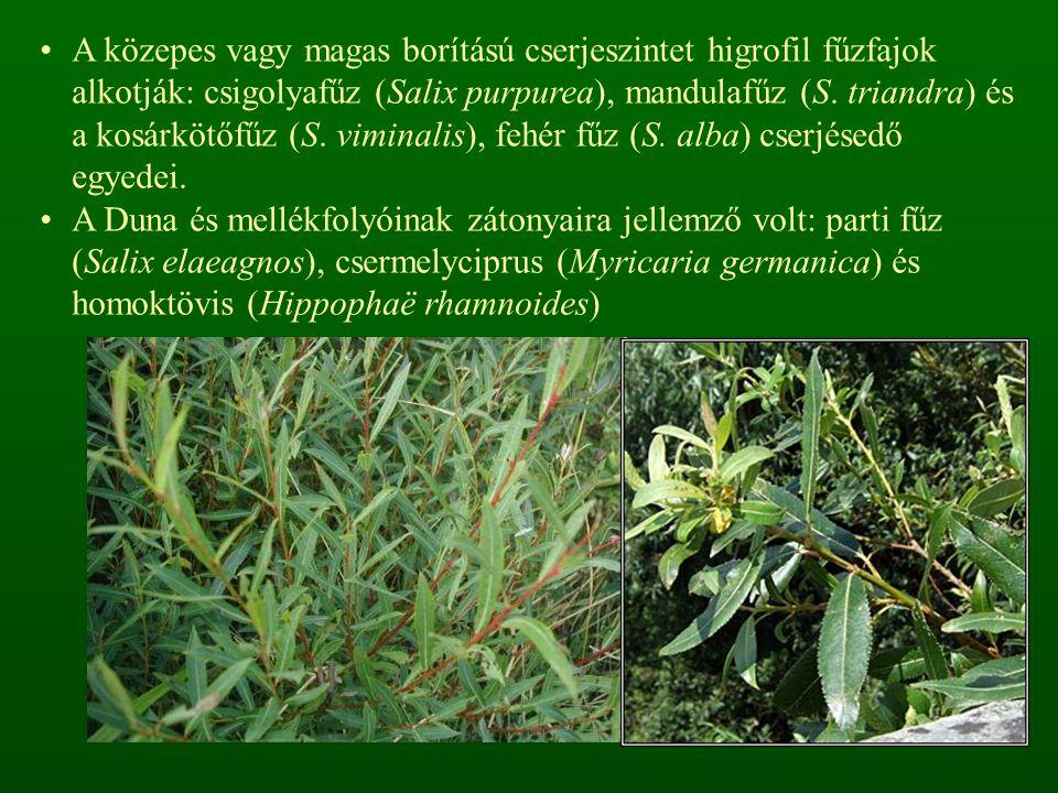 A közepes vagy magas borítású cserjeszintet higrofil fűzfajok alkotják: csigolyafűz (Salix purpurea), mandulafűz (S. triandra) és a kosárkötőfűz (S. viminalis), fehér fűz (S. alba) cserjésedő egyedei.
