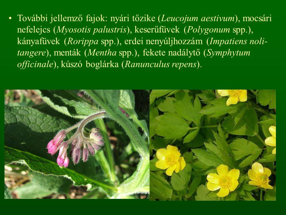 További jellemző fajok: nyári tőzike (Leucojum aestivum), mocsári nefelejcs (Myosotis palustris), keserűfüvek (Polygonum spp.), kányafüvek (Rorippa spp.), erdei nenyúljhozzám (Impatiens noli-tangere), menták (Mentha spp.), fekete nadálytő (Symphytum officinale), kúszó boglárka (Ranunculus repens).