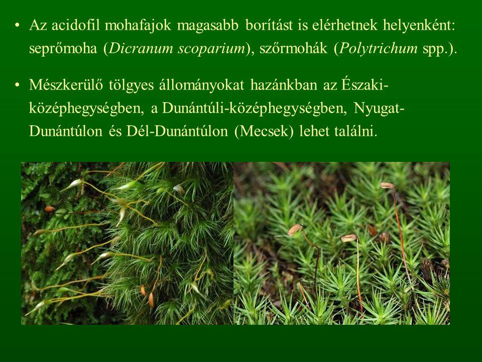 Az acidofil mohafajok magasabb borítást is elérhetnek helyenként: seprőmoha (Dicranum scoparium), szőrmohák (Polytrichum spp.).