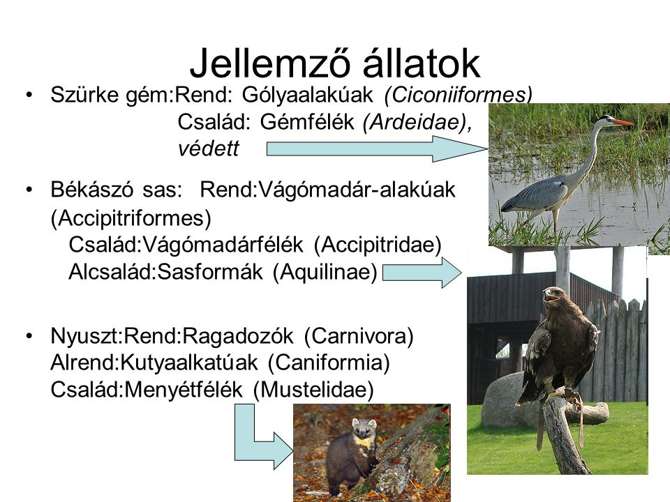 Jellemző állatok Szürke gém:Rend: Gólyaalakúak (Ciconiiformes) Család: Gémfélék (Ardeidae), védett.
