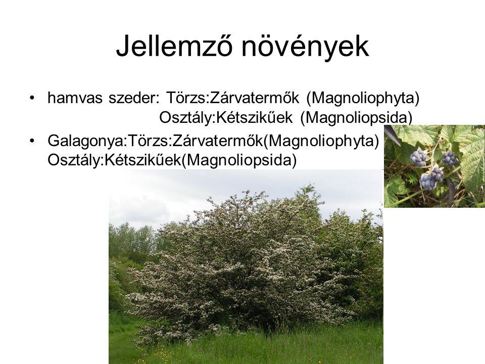 Jellemző növények hamvas szeder: Törzs:Zárvatermők (Magnoliophyta) Osztály:Kétszikűek (Magnoliopsida)