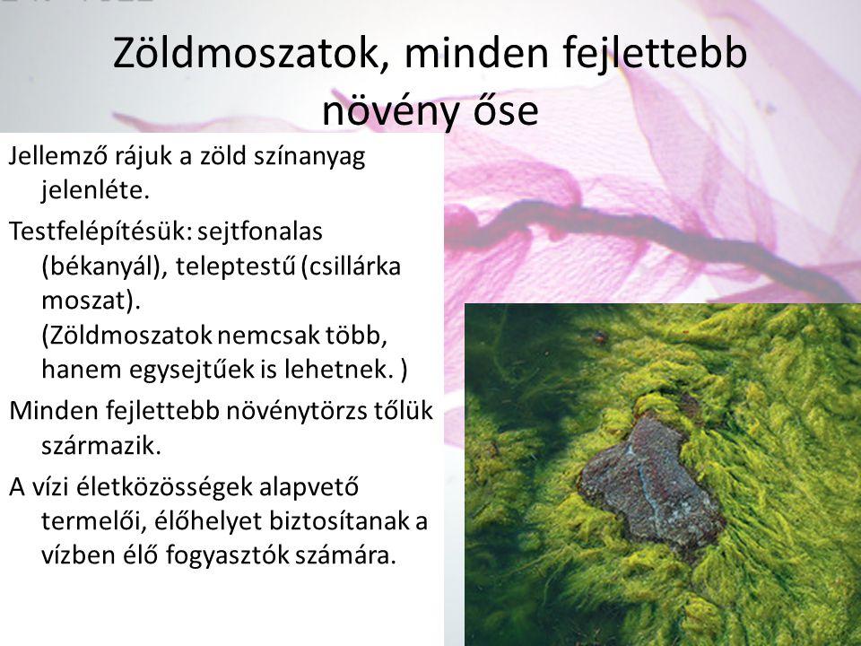 Zöldmoszatok, minden fejlettebb növény őse