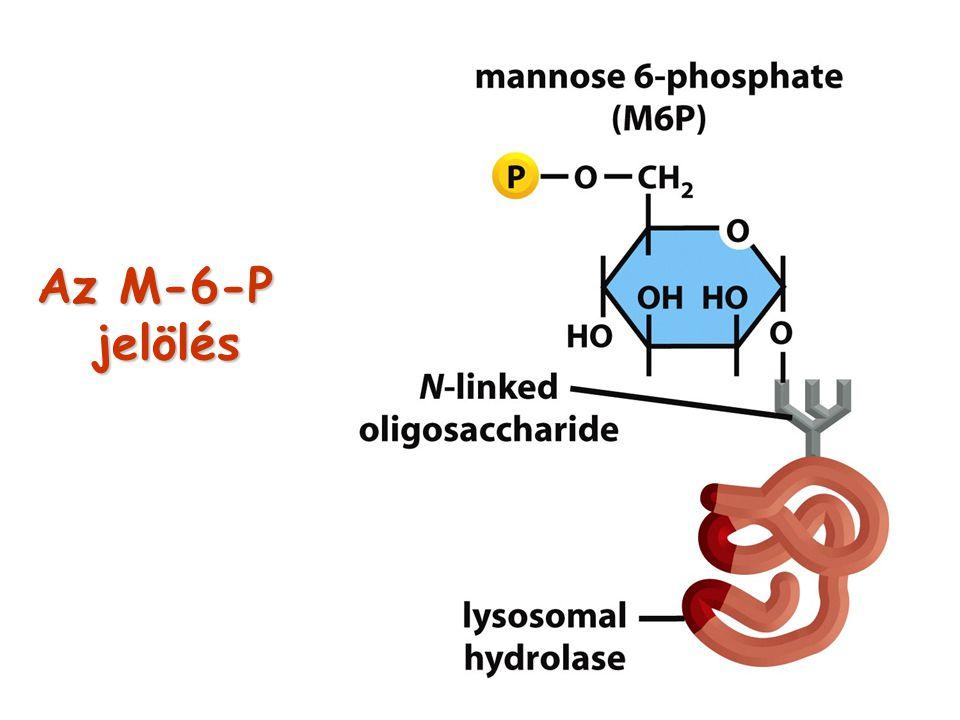 Az M-6-P jelölés