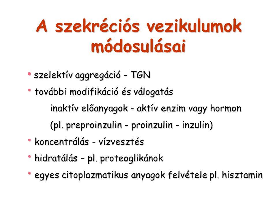 A szekréciós vezikulumok módosulásai