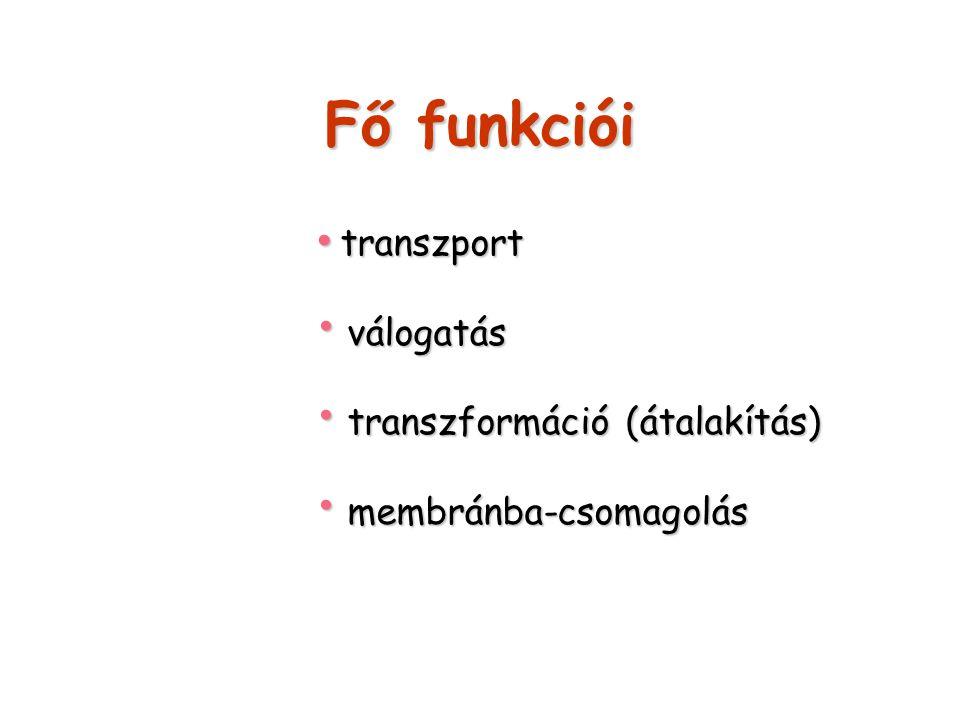 Fő funkciói válogatás transzformáció (átalakítás) membránba-csomagolás