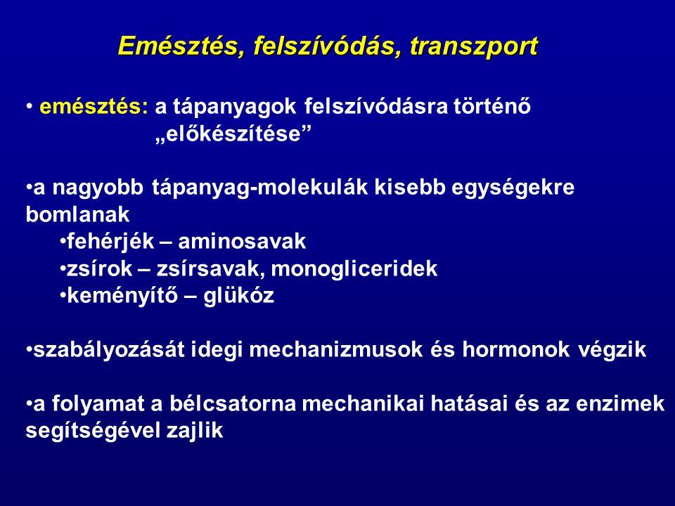 Emésztés, felszívódás, transzport