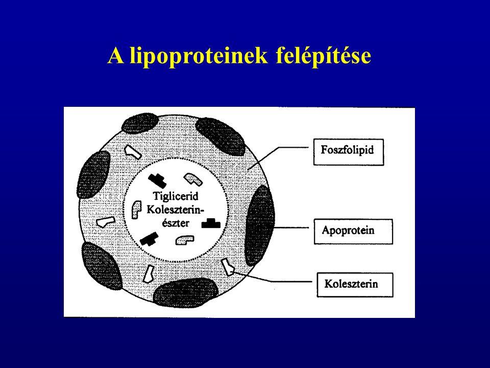 A lipoproteinek felépítése