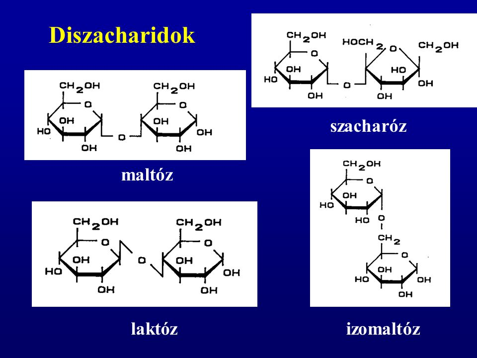Diszacharidok szacharóz maltóz laktóz izomaltóz