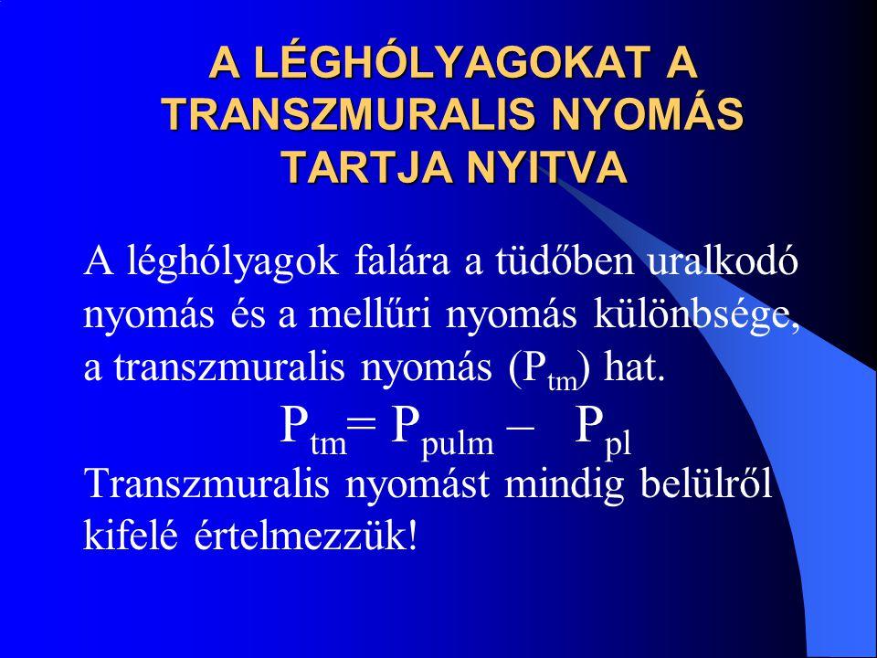 A LÉGHÓLYAGOKAT A TRANSZMURALIS NYOMÁS TARTJA NYITVA