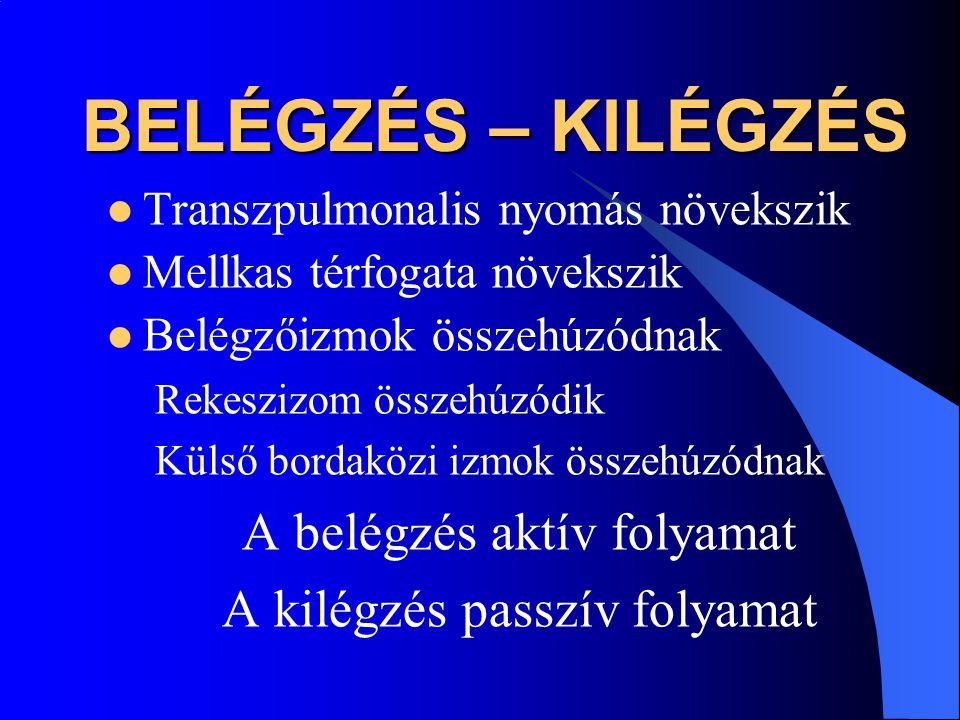 BELÉGZÉS – KILÉGZÉS A belégzés aktív folyamat