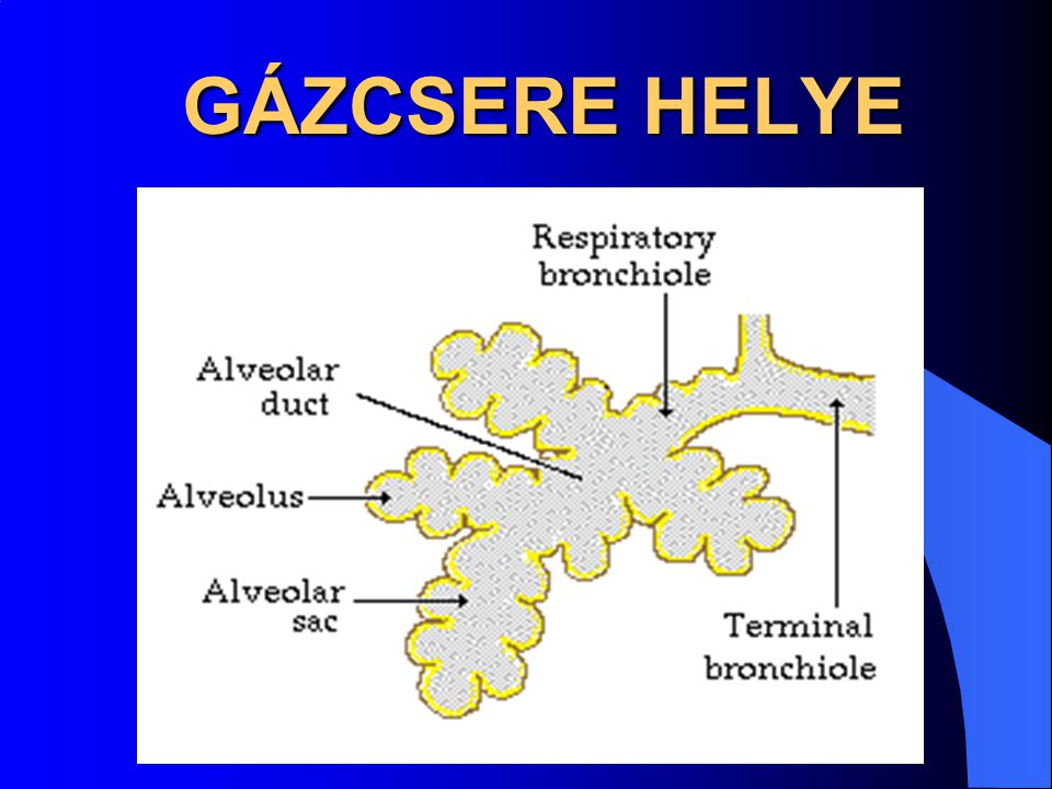 GÁZCSERE HELYE