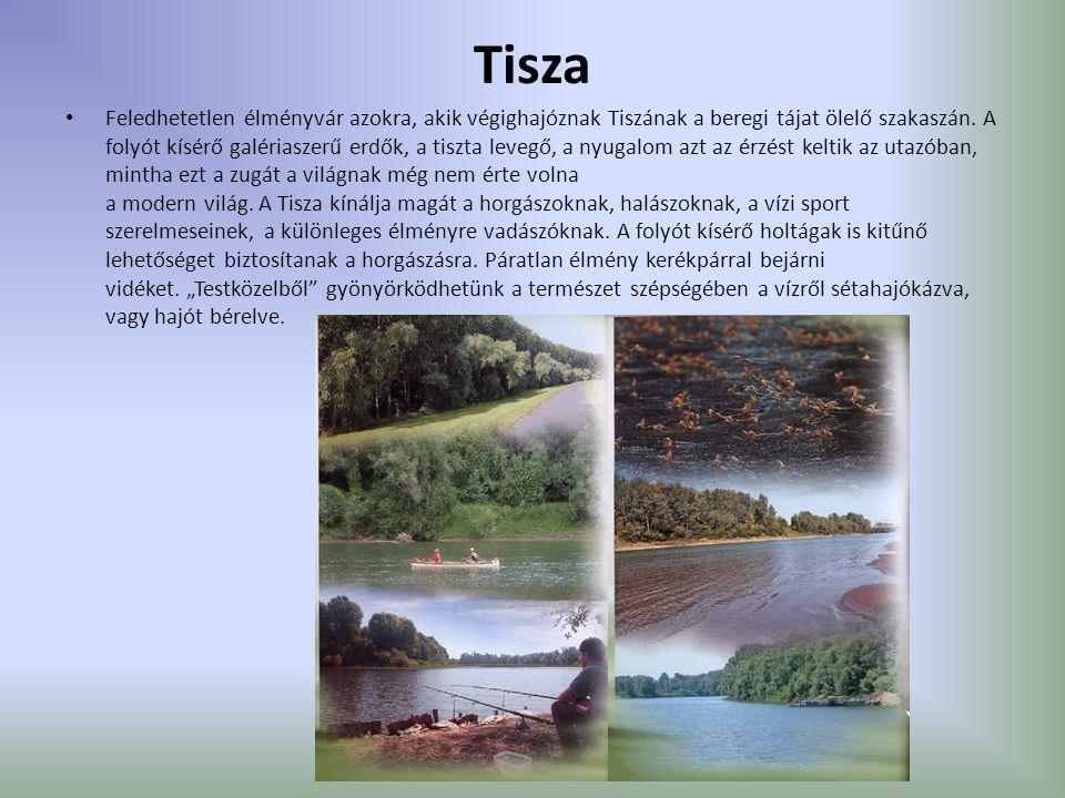 Tisza