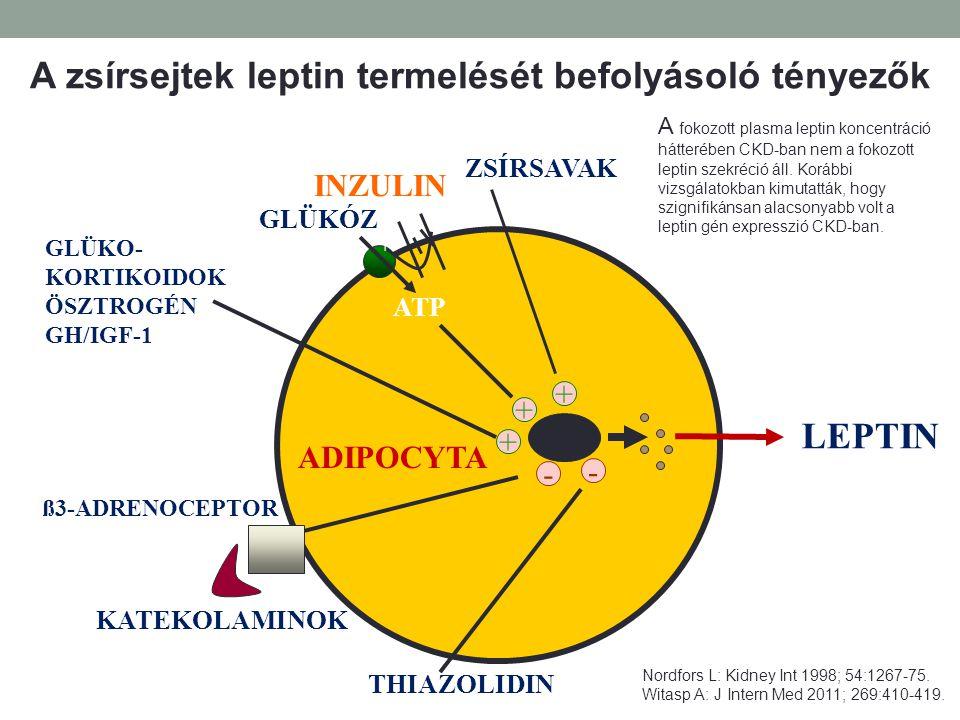 A zsírsejtek leptin termelését befolyásoló tényezők