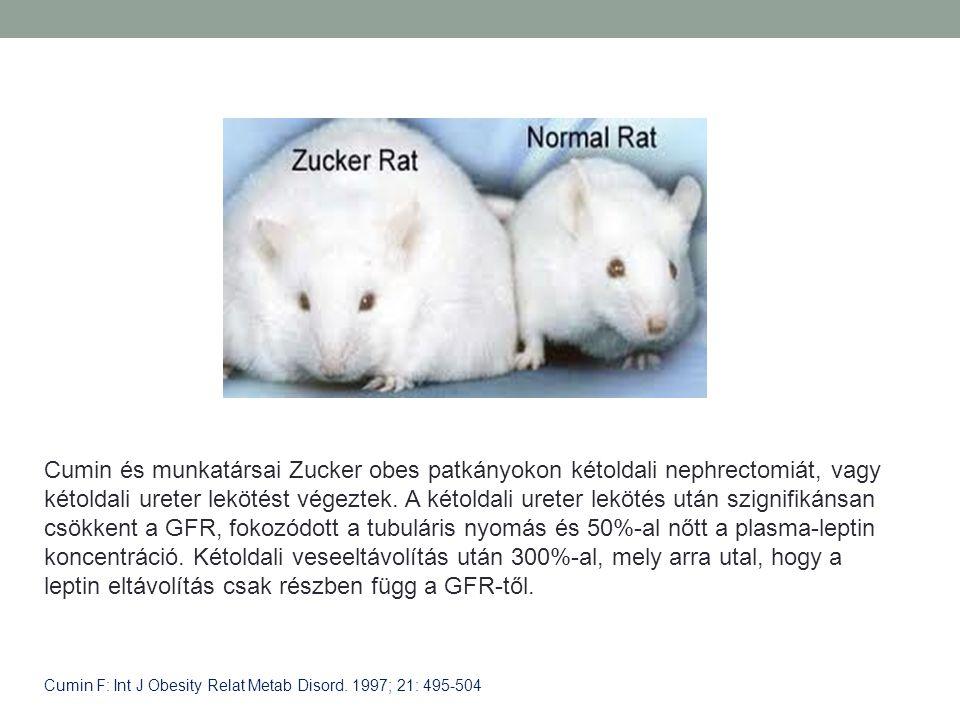 Cumin és munkatársai Zucker obes patkányokon kétoldali nephrectomiát, vagy kétoldali ureter lekötést végeztek. A kétoldali ureter lekötés után szignifikánsan csökkent a GFR, fokozódott a tubuláris nyomás és 50%-al nőtt a plasma-leptin koncentráció. Kétoldali veseeltávolítás után 300%-al, mely arra utal, hogy a leptin eltávolítás csak részben függ a GFR-től.