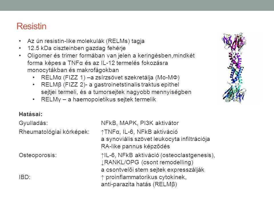 Resistin Az ún resistin-like molekulák (RELMs) tagja