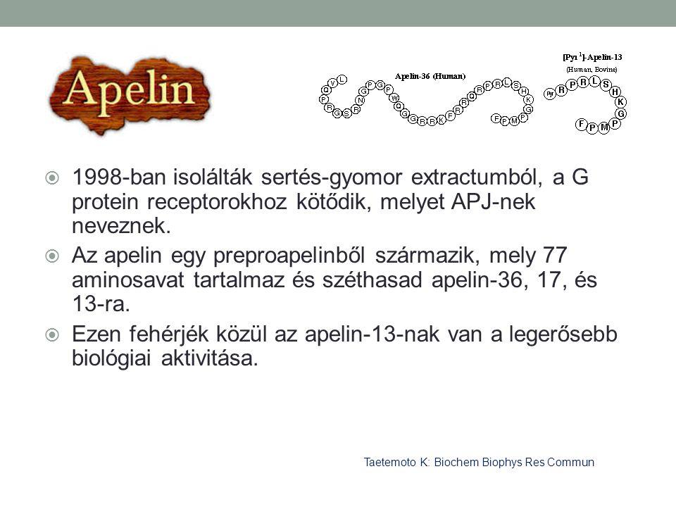 1998-ban isolálták sertés-gyomor extractumból, a G protein receptorokhoz kötődik, melyet APJ-nek neveznek.
