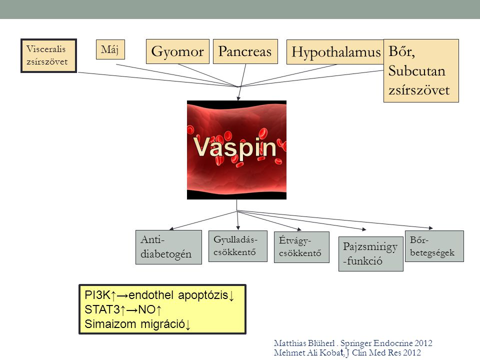 Vaspin Gyomor Pancreas Hypothalamus Bőr, Subcutan zsírszövet Máj
