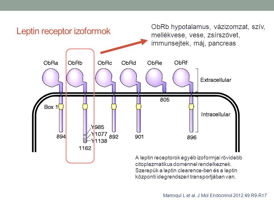 Leptin receptor izoformok