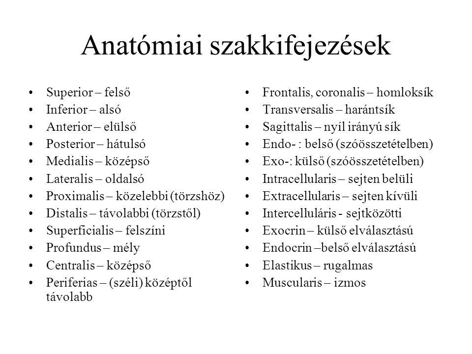 Anatómiai szakkifejezések