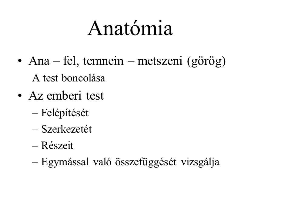 Anatómia Ana – fel, temnein – metszeni (görög) Az emberi test