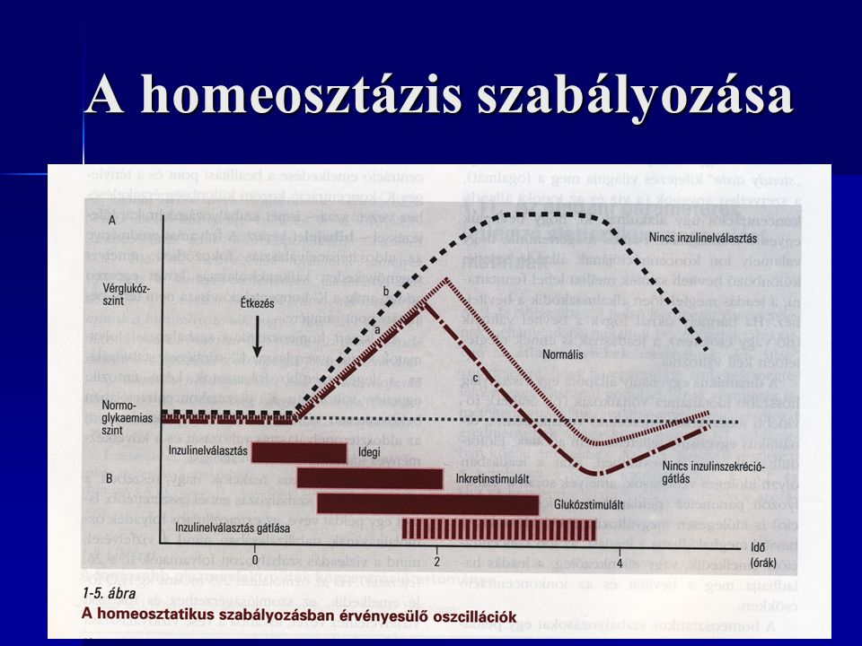 A homeosztázis szabályozása