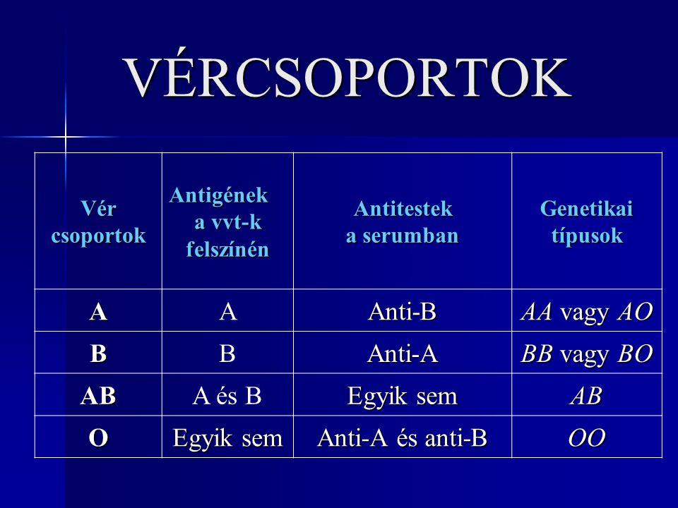 VÉRCSOPORTOK A Anti-B AA vagy AO B Anti-A BB vagy BO AB A és B