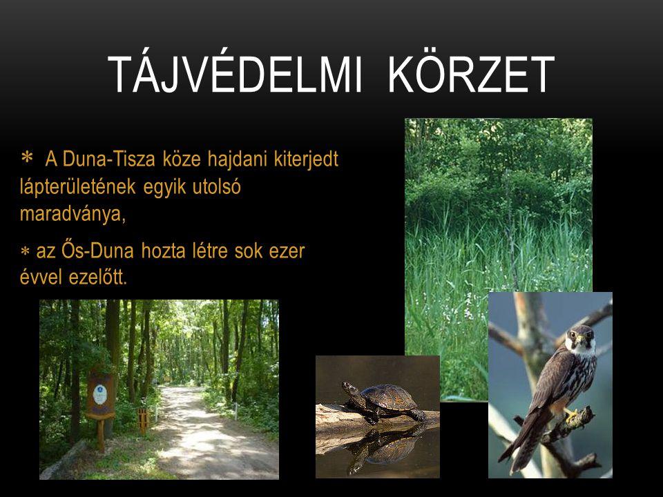 Tájvédelmi körzet A Duna-Tisza köze hajdani kiterjedt lápterületének egyik utolsó maradványa, az Ős-Duna hozta létre sok ezer évvel ezelőtt.