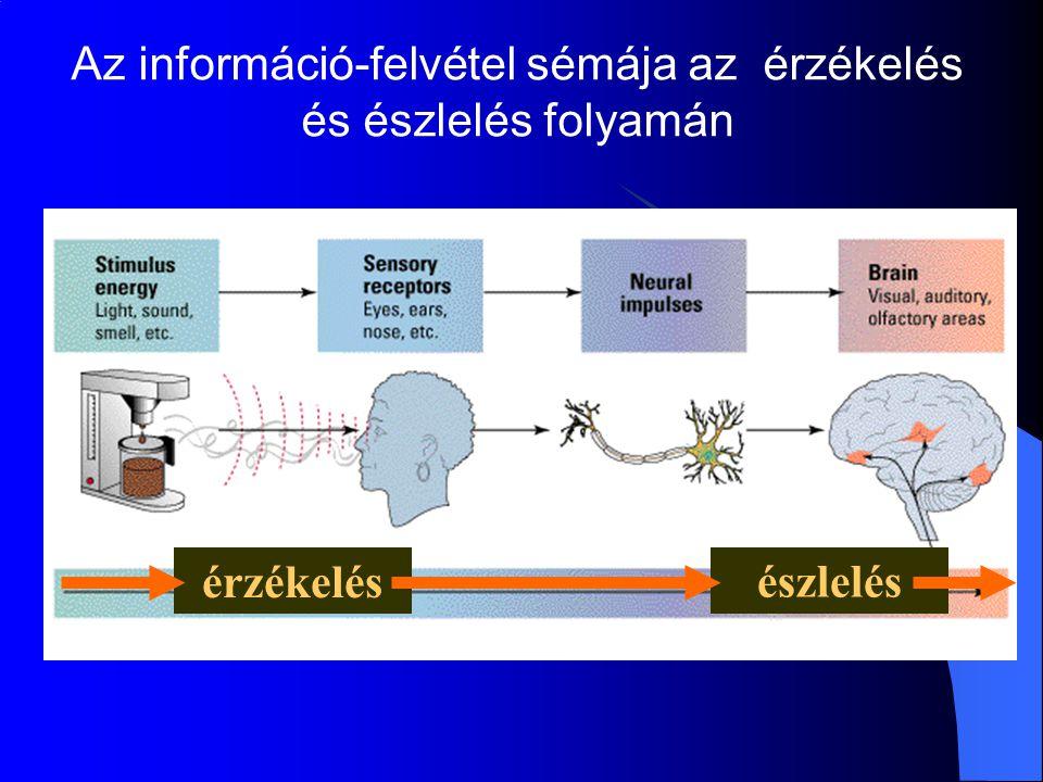Az információ-felvétel sémája az érzékelés és észlelés folyamán