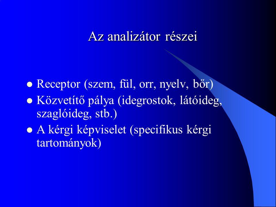 Az analizátor részei Receptor (szem, fül, orr, nyelv, bőr)
