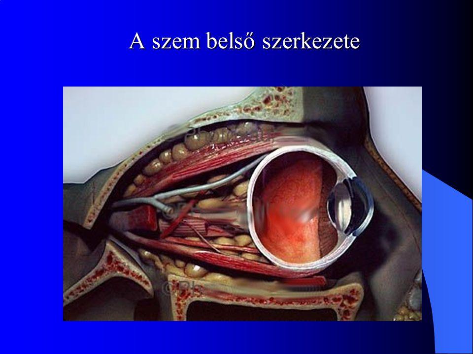 A szem belső szerkezete