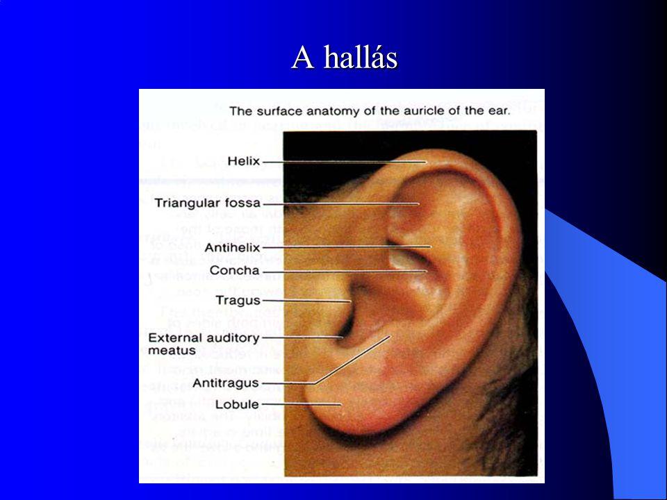 A hallás