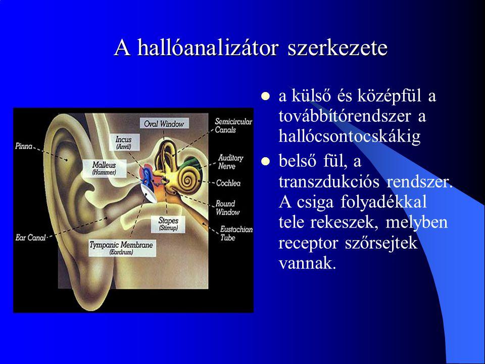 A hallóanalizátor szerkezete