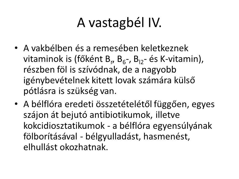 A vastagbél IV.