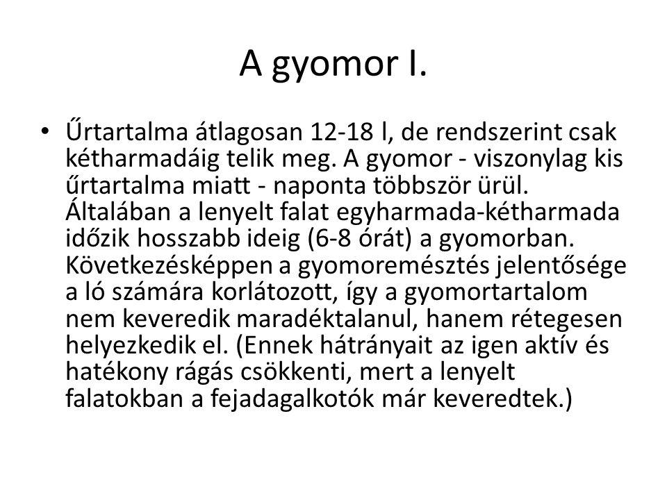 A gyomor I.
