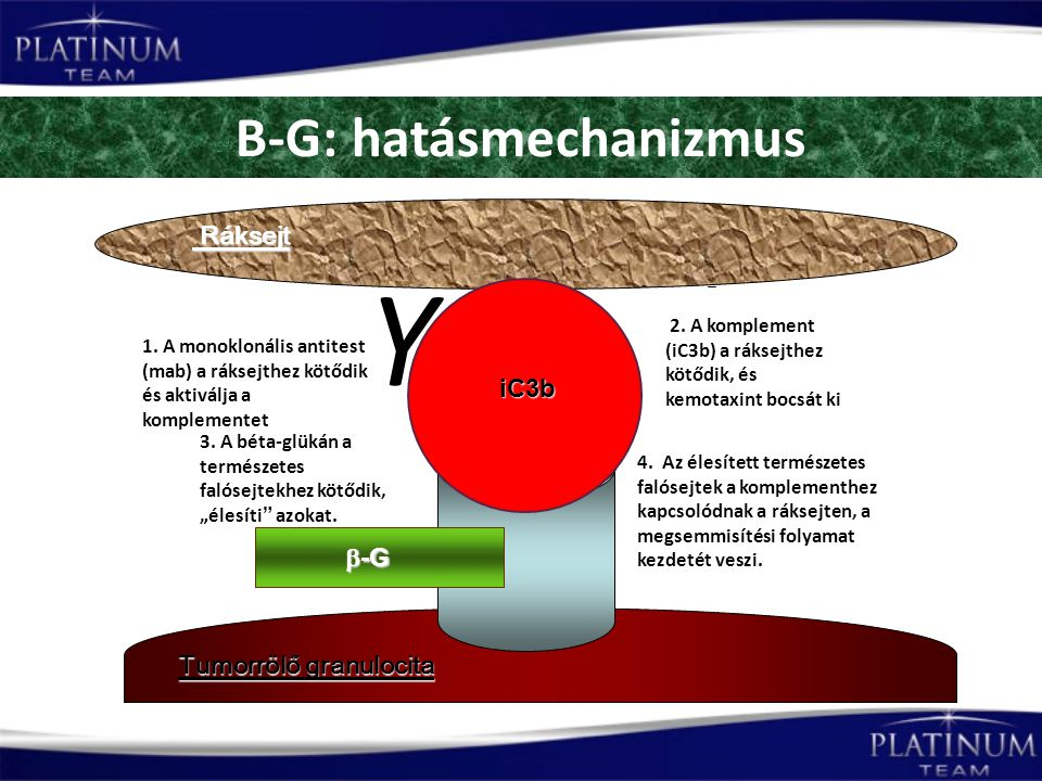 B-G: hatásmechanizmus