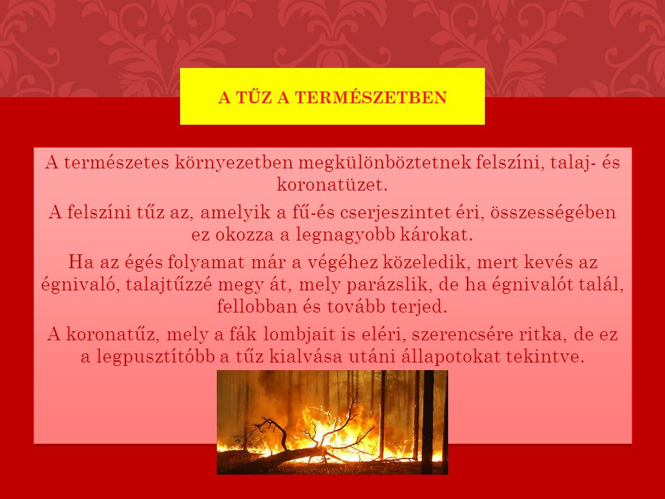 A tűz a természetben
