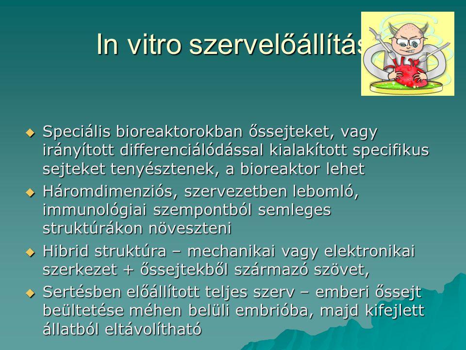 In vitro szervelőállítás
