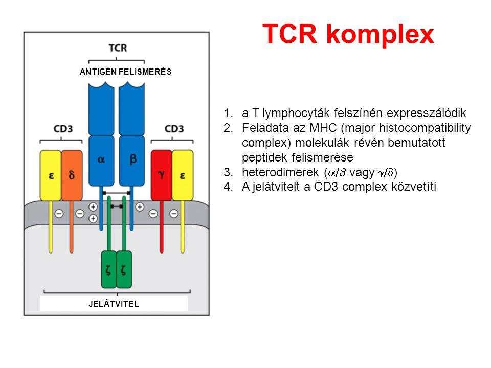 Figure 3-6 TCR komplex a T lymphocyták felszínén expresszálódik