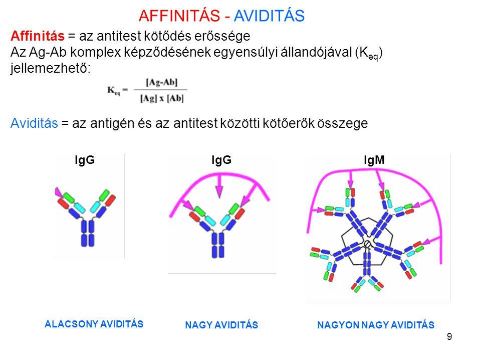 AFFINITÁS - AVIDITÁS Affinitás = az antitest kötődés erőssége