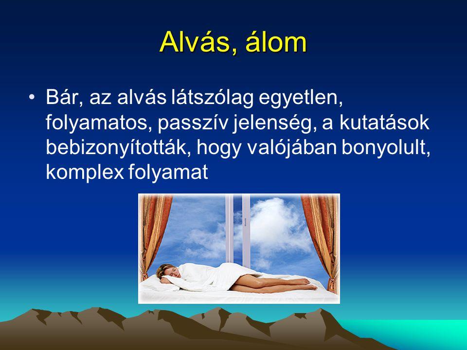 Alvás, álom Bár, az alvás látszólag egyetlen, folyamatos, passzív jelenség, a kutatások bebizonyították, hogy valójában bonyolult, komplex folyamat.