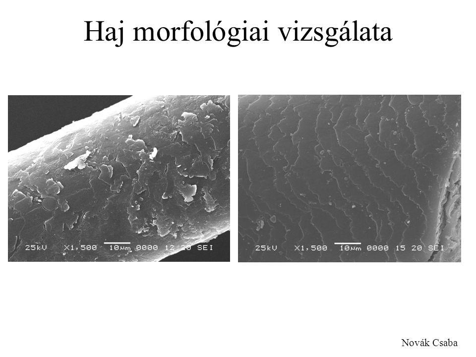 Haj morfológiai vizsgálata