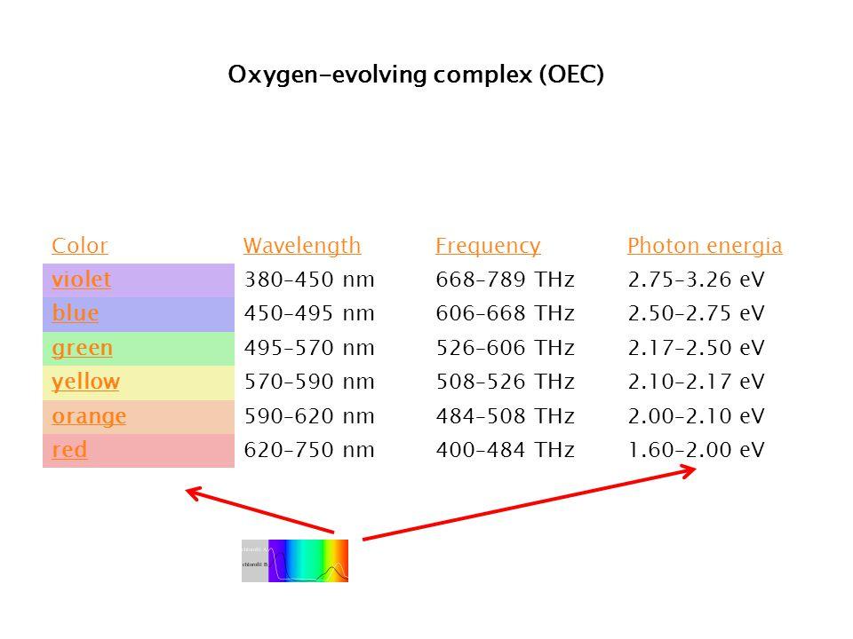 Oxygen-evolving complex (OEC)