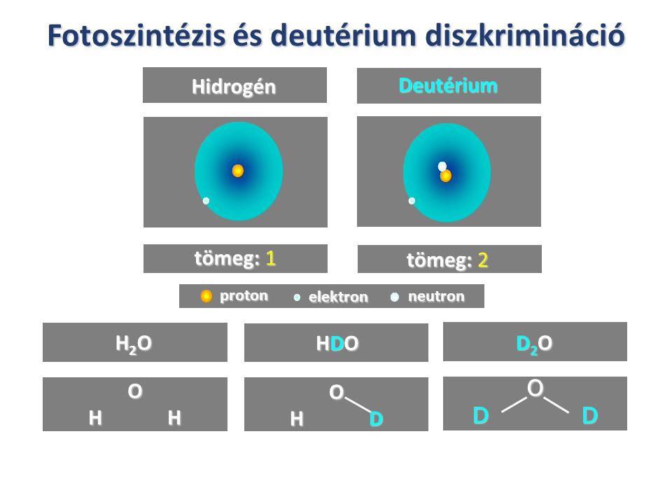Fotoszintézis és deutérium diszkrimináció