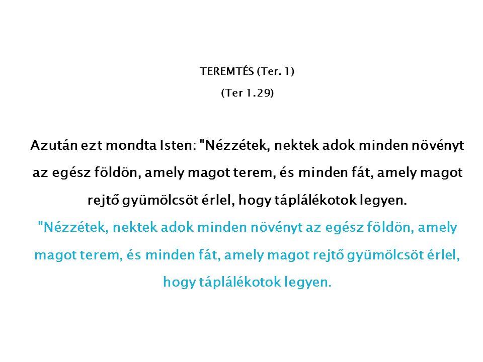 TEREMTÉS (Ter. 1) (Ter 1.29)